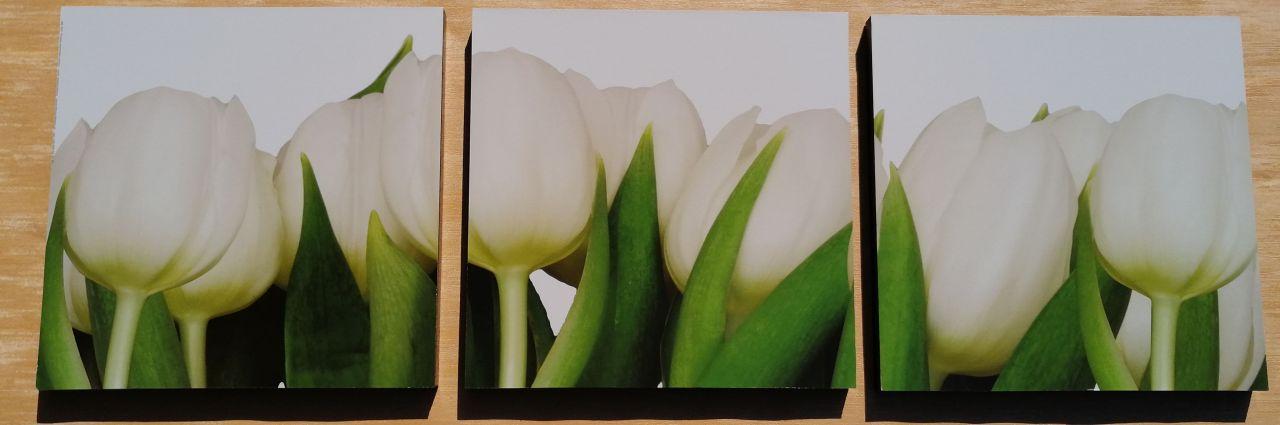 Fehér tulipán 3 részes falikép 90x30