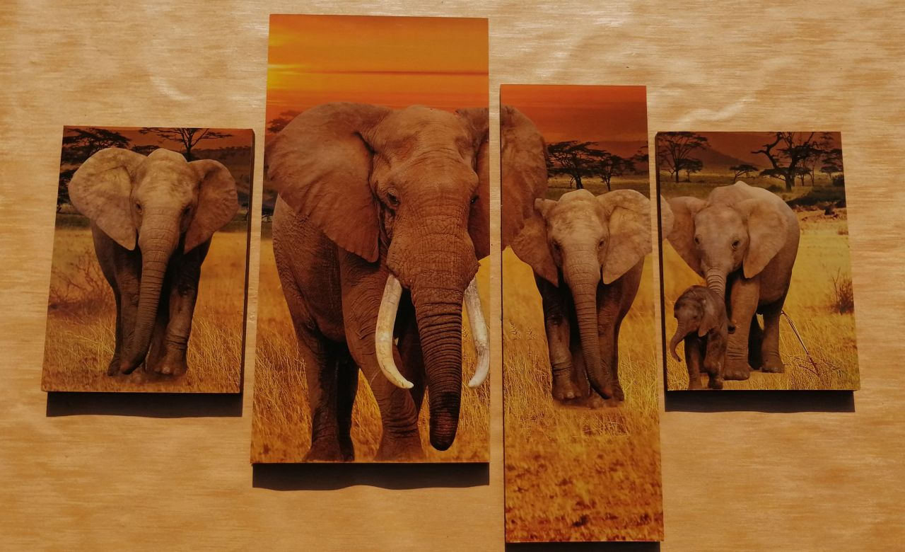 Elefántok 4 részes falikép 100 x 70